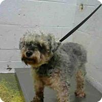Adopt A Pet :: PUMBAA - Atlanta, GA