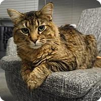 Adopt A Pet :: Rocky - Frankfort, IL