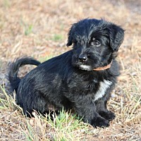 Adopt A Pet :: Krowe - San Diego, CA