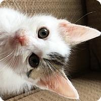 Adopt A Pet :: Squiggy - Walworth, NY