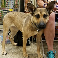 Adopt A Pet :: Courtesy Post_Jacque - Scottsdale, AZ