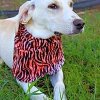 Adopt A Pet :: Johnny - Batesville, AR