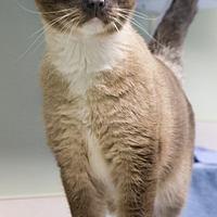 Adopt A Pet :: Solomon - Batavia, OH