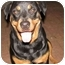 Photo 4 - Rottweiler Dog for adoption in Cedar Creek, Texas - Nala