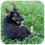 Photo 4 - German Shepherd Dog Dog for adoption in Dripping Springs, Texas - Rolf
