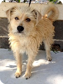 Terrier (Unknown Type, Small) Mix Dog for adoption in Dublin, California - Bear