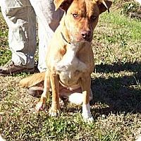 Adopt A Pet :: CASSIDY/kathydavisday@gmail - Glastonbury, CT