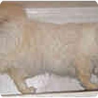 Adopt A Pet :: Audrea - Dallas, TX
