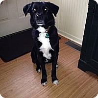 Adopt A Pet :: Deuce - Lewisville, IN