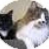 Adopt A Pet :: Bob - Prescott, AZ
