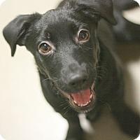 Adopt A Pet :: Katie - Canoga Park, CA