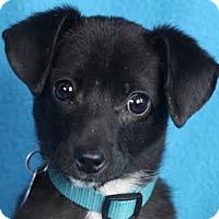 Adopt A Pet :: Toby - Minneapolis, MN