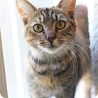 Adopt A Pet :: Billie - Dalton, GA
