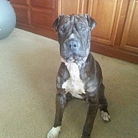 Adopt A Pet :: Freddie bonded with Princess - Las Vegas, NV