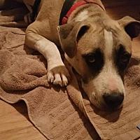 Adopt A Pet :: Floki - Phoenix, AZ