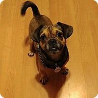 Adopt A Pet :: Sebastian - Parsippany, NJ