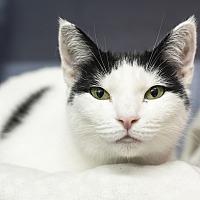 Adopt A Pet :: Sadie - Whitehall, PA