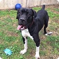 Adopt A Pet :: Murph - Virginia Beach, VA
