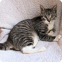 Adopt A Pet :: Peterweets - Morganton, NC