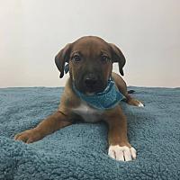 Adopt A Pet :: Tako - Joliet, IL