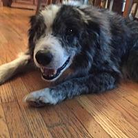 Adopt A Pet :: Captain - Minneapolis, MN