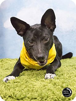 Terrier (Unknown Type, Small) Mix Dog for adoption in Freeport, Maine - Joey