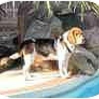 Adopt A Pet :: Cooper D - Phoenix, AZ
