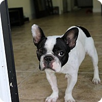 Adopt A Pet :: Minion