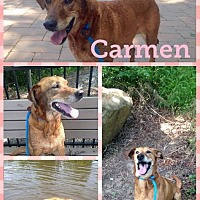 Adopt A Pet :: Carmen - Colonial Heights, VA