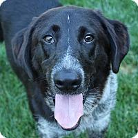Adopt A Pet :: Wilson - AUR, IL