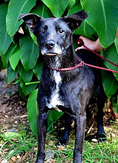 Labrador Retriever Mix Dog for adoption in Jackson, Mississippi - Blaze