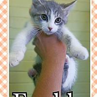 Adopt A Pet :: Freddy - Edwards AFB, CA