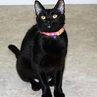 Adopt A Pet :: Inky - Cuero, TX