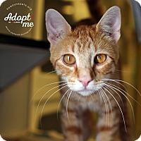 Adopt A Pet :: Lancelot - Lyons, NY
