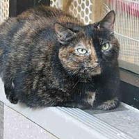 Adopt A Pet :: MEGAN - Toronto, ON
