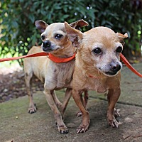 Adopt A Pet :: Tinkerbell and Little Man - Allentown, PA