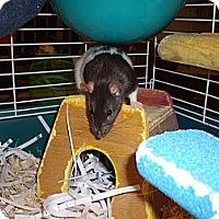 Adopt A Pet :: Dancer - Greenwood, MI