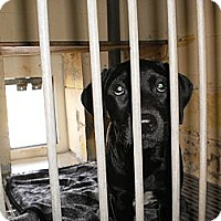Adopt A Pet :: Phoenix - Wallaceburg, ON