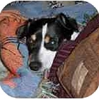 Adopt A Pet :: Morrocco - Jacksonville, FL