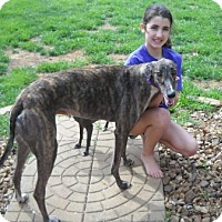 Adopt A Pet :: Nancie New - Knoxville, TN