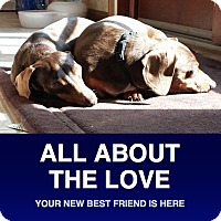 Adopt A Pet :: Chloe & Lucy - Morrisville, PA