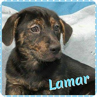 Jack Russell Terrier/Terrier (Unknown Type, Small) Mix Puppy for adoption in Newnan, Georgia - Lamar