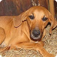 Adopt A Pet :: Savannah - South Dennis, MA