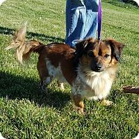 Adopt A Pet :: Cooper - West Warwick, RI