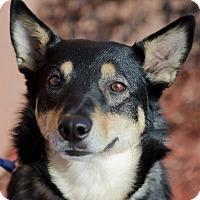 Adopt A Pet :: Tina - Chaska, MN