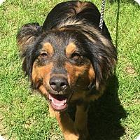 Adopt A Pet :: Ranger - Bedminster, NJ