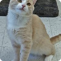 Adopt A Pet :: Hello - Chambersburg, PA