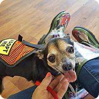 Adopt A Pet :: Jazzy - Homestead, FL