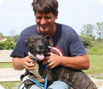 Boxer Mix Dog for adoption in Elyria, Ohio - Slim