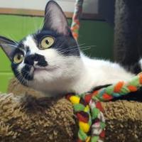 Adopt A Pet :: Lara - Bolingbrook, IL
